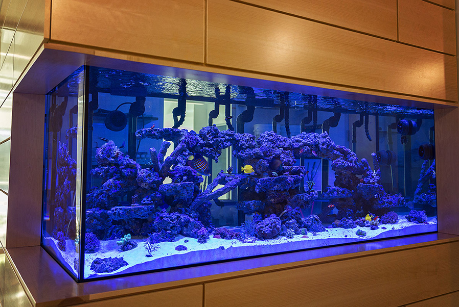 Adirondack Hall is home to a new aquarium.