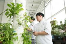 culinary arts students harvest herbs