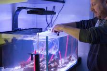 student cleaning aquarium